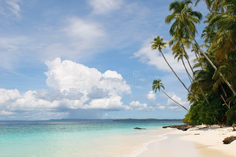 热带海岛-海运、天空和棕榈树 图库摄影