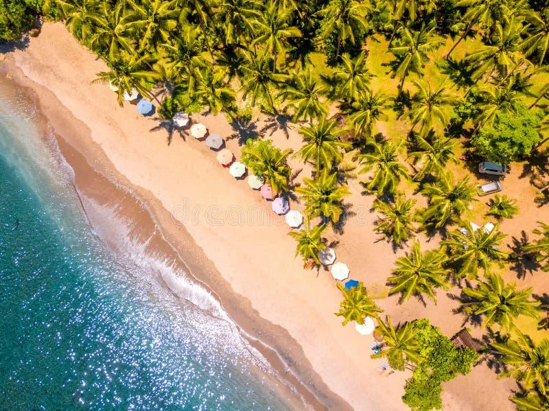 热带海滩和许多棕榈树 鸟瞰图 免版税库存图片