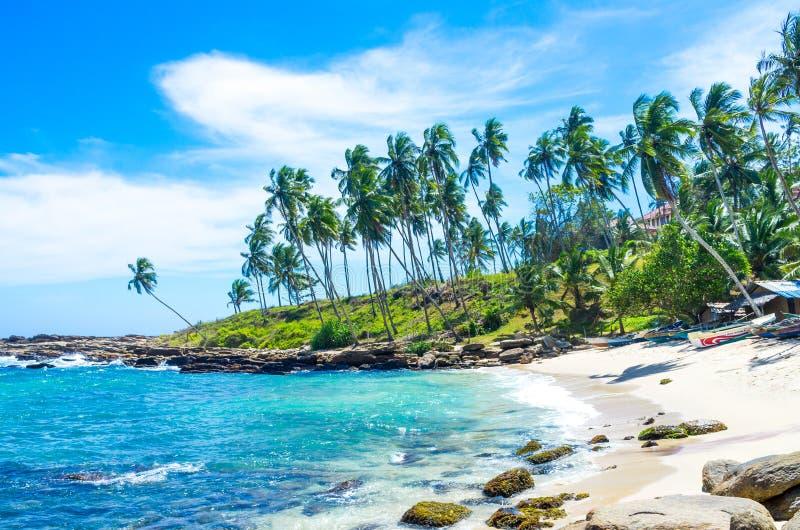 热带海滩在斯里兰卡, 库存图片