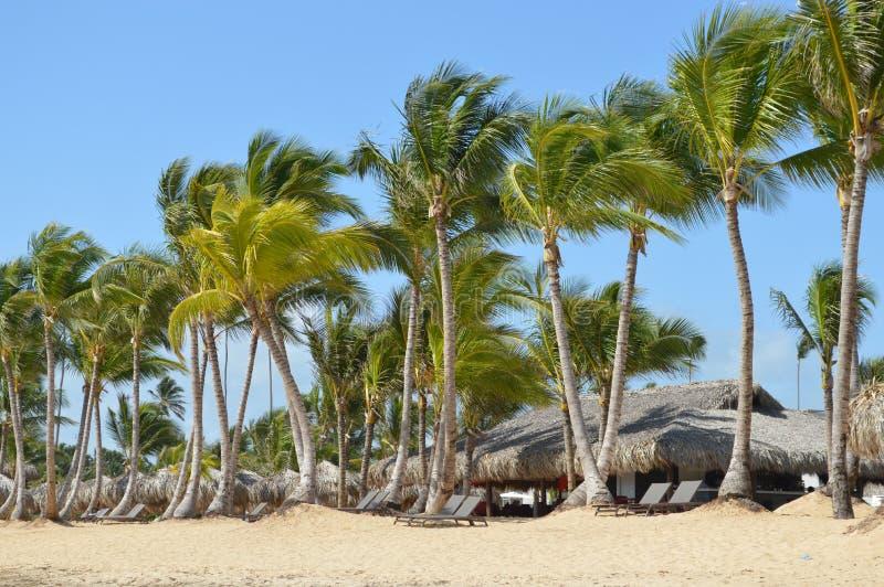 热带海滩多米尼加共和国 免版税库存照片