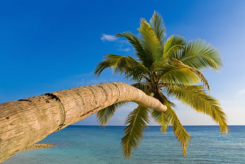 热带海滩弯曲的棕榈树 库存图片