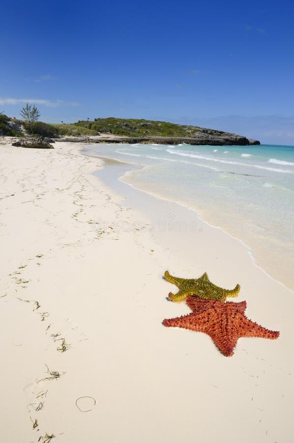 热带海滩的古巴人 库存照片