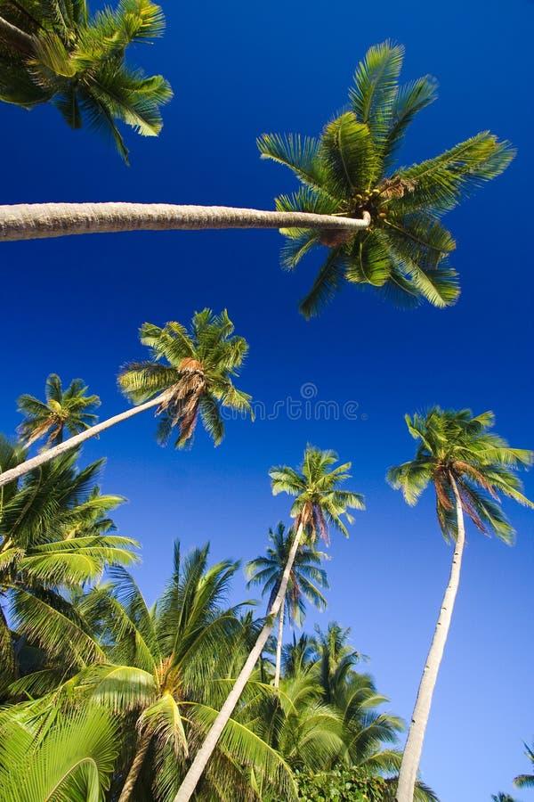 热带海滩的天堂 库存照片