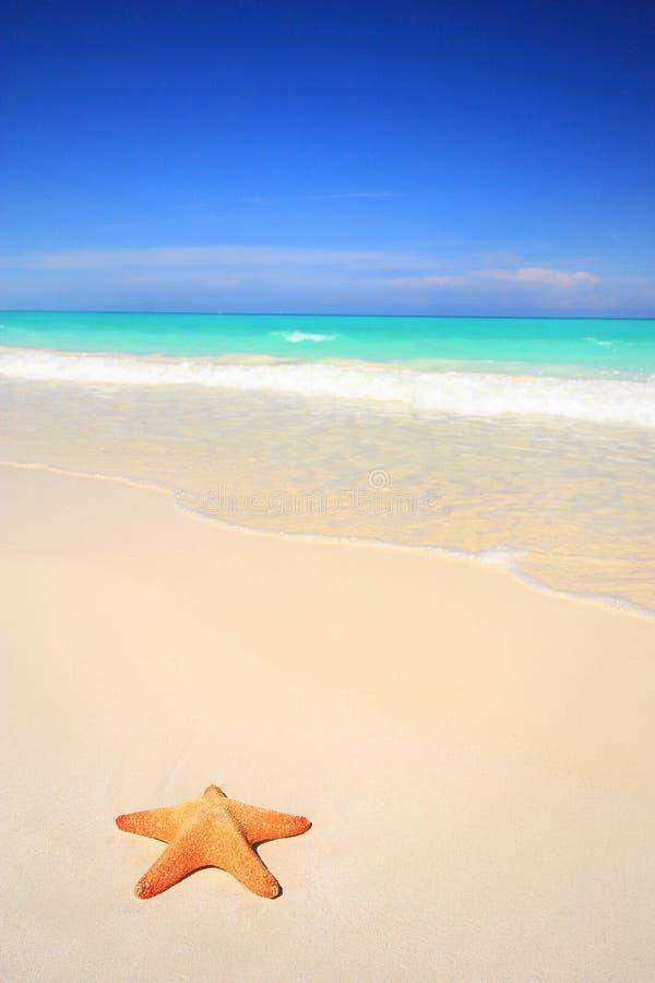 热带海滩的海星 库存照片