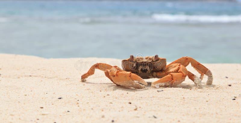 热带海滩的螃蟹 免版税库存照片