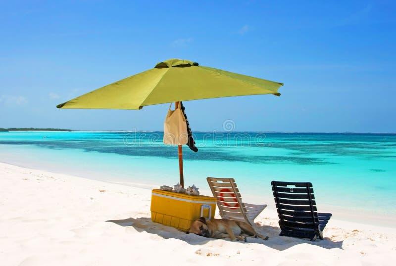 热带海滩的野餐 免版税图库摄影