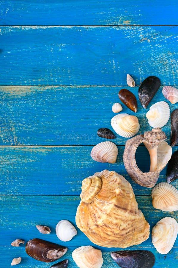 热带海背景 在蓝色委员会的不同的壳,顶视图 题字的自由空间 r 免版税库存图片