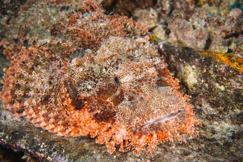 热带海鱼礁石石头鱼 库存照片