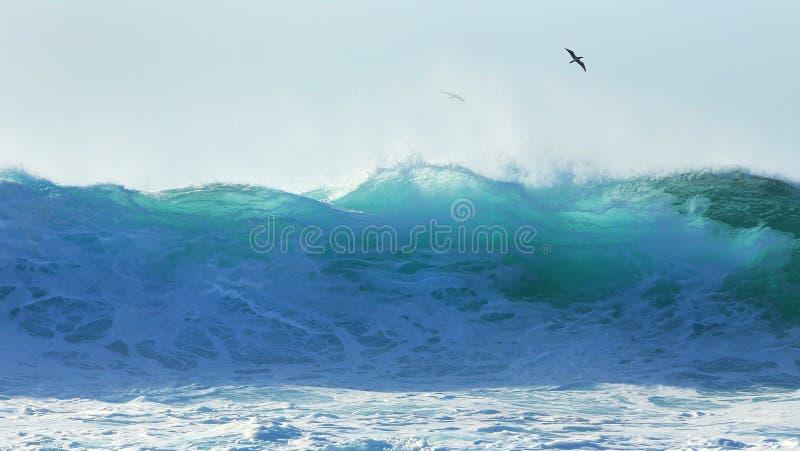 热带海鸟腾飞在管道海浪 库存图片