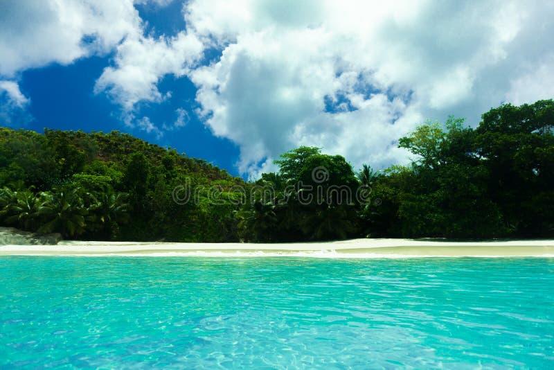 热带海滩丰富的植被棕榈 免版税库存照片