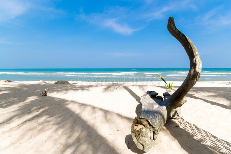 热带海滩停止的结构树 免版税库存照片