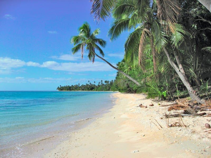 热带海滩在斐济岛 库存图片