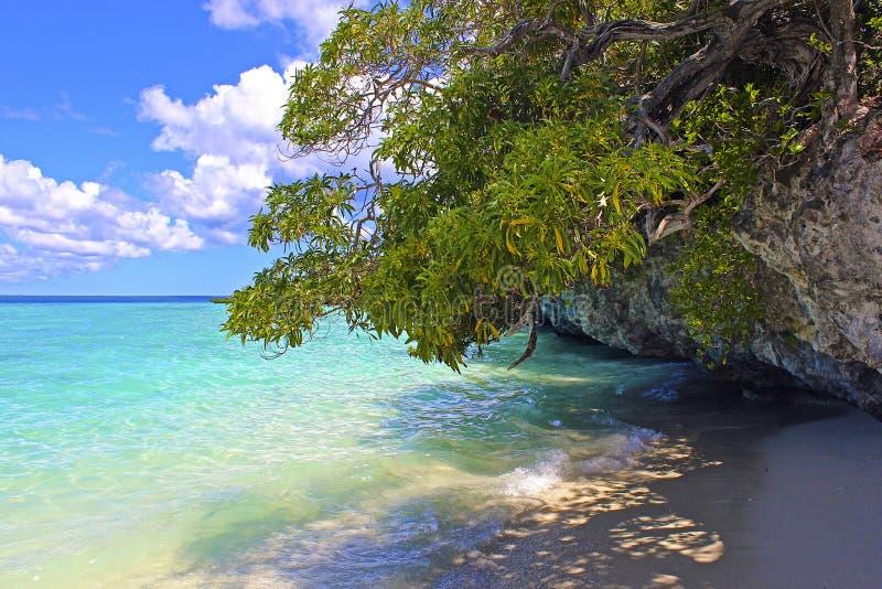 热带海滩在Lifou,新喀里多尼亚 免版税图库摄影