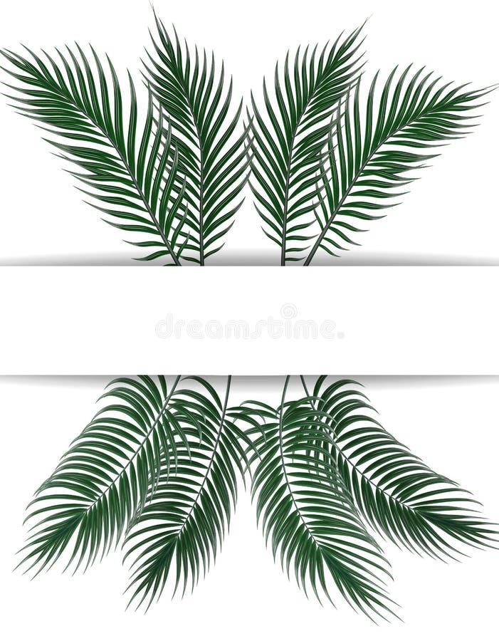 热带深绿棕榈叶 做广告的,公告地方 集合 在空白背景 例证 皇族释放例证