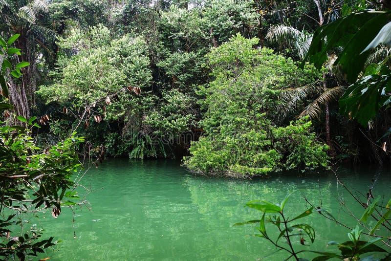 热带湖在美洲红树雨林里 库存图片