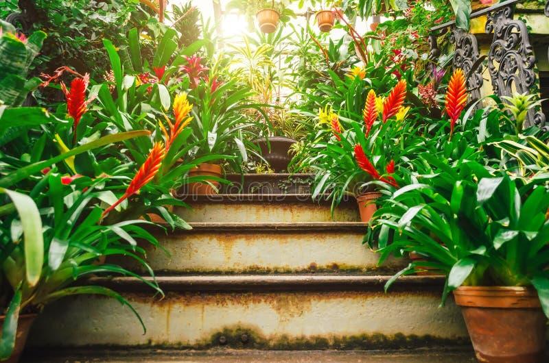 热带潮湿森林丛林的开花的vriesea植物  图库摄影