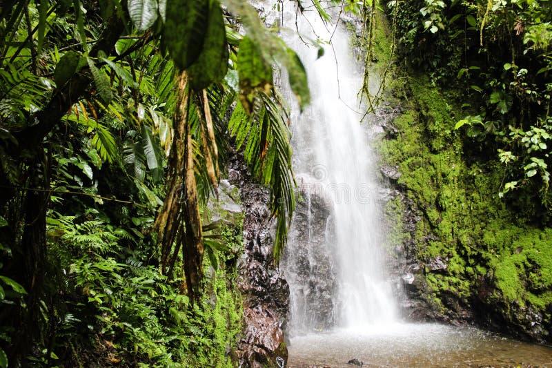 热带瀑布雨林哥斯达黎加 免版税库存照片