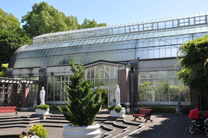 热带热的房子的看法奥克兰领域的冬季花园 库存图片