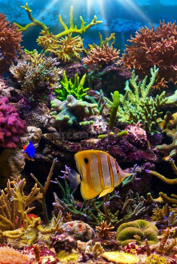 热带珊瑚礁的场面 图库摄影