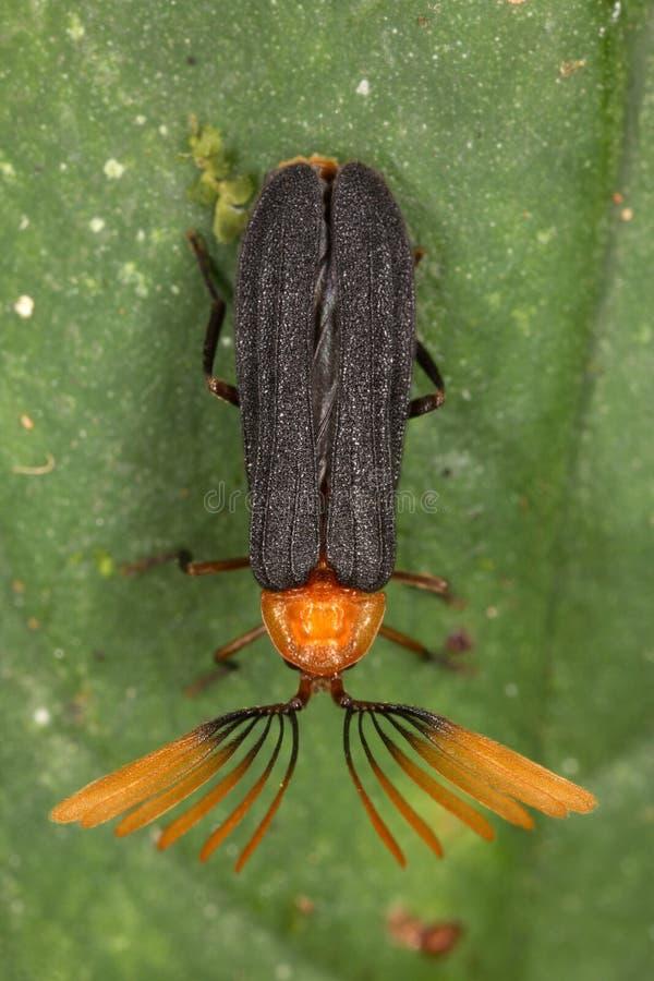 热带甲虫是惊人和各种各样的 免版税库存图片