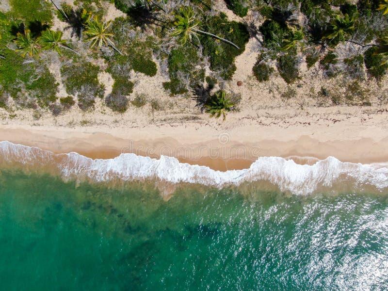 热带白色沙滩和绿松石明白海水空中顶视图与小波浪和棕榈树背景的 免版税库存图片