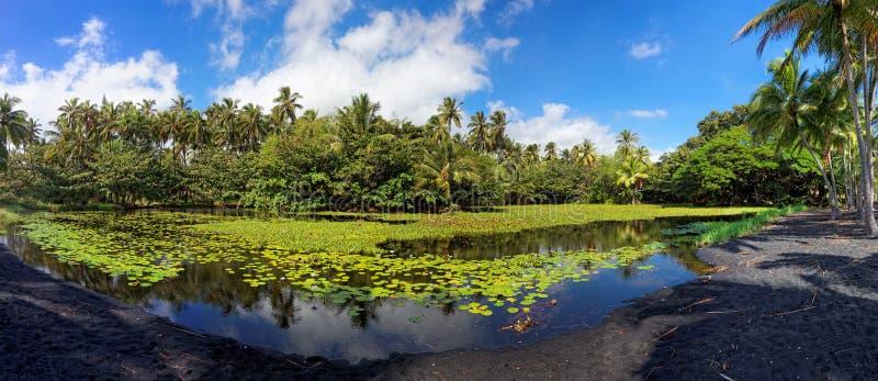 热带百合的池塘 免版税图库摄影
