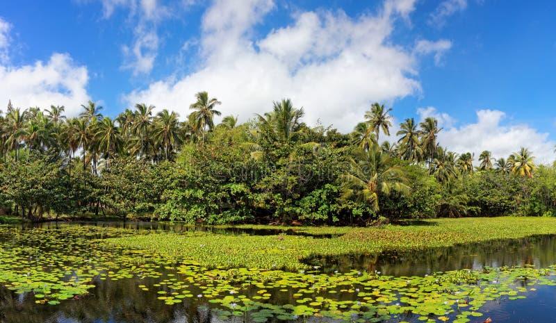热带百合的池塘 免版税库存图片