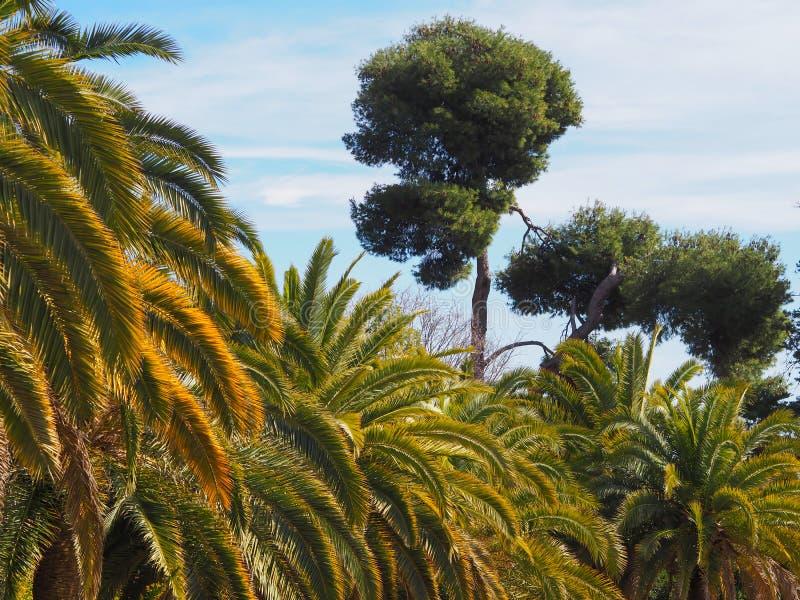 热带的公园 美丽的结构树 库存图片