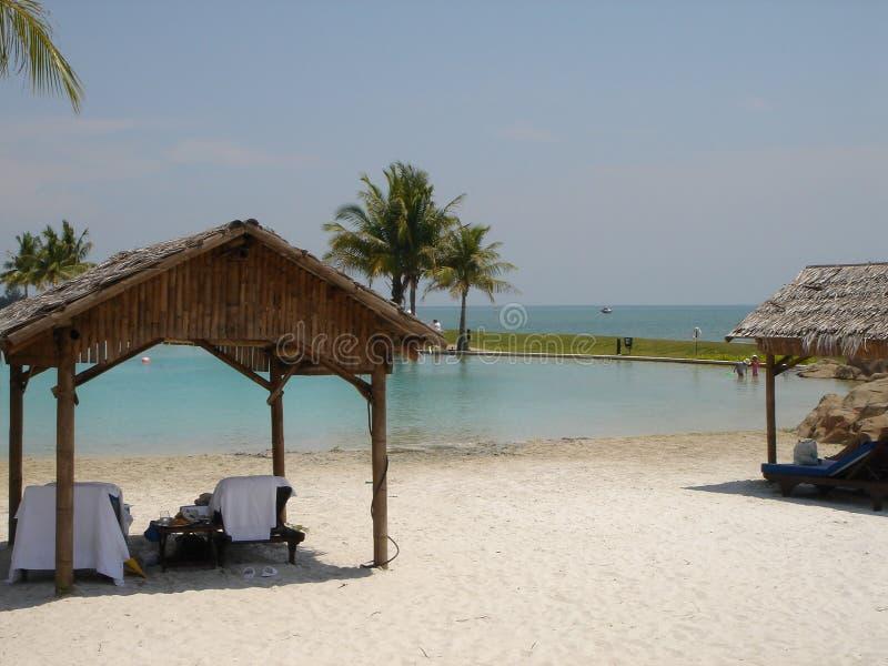 热带的其它 免版税库存图片