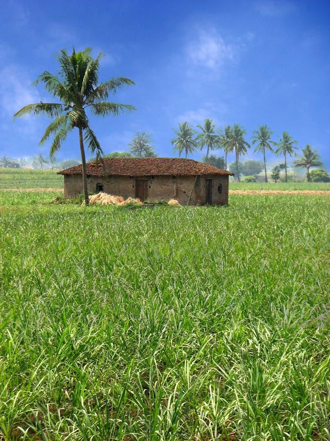 热带的农舍 免版税库存图片