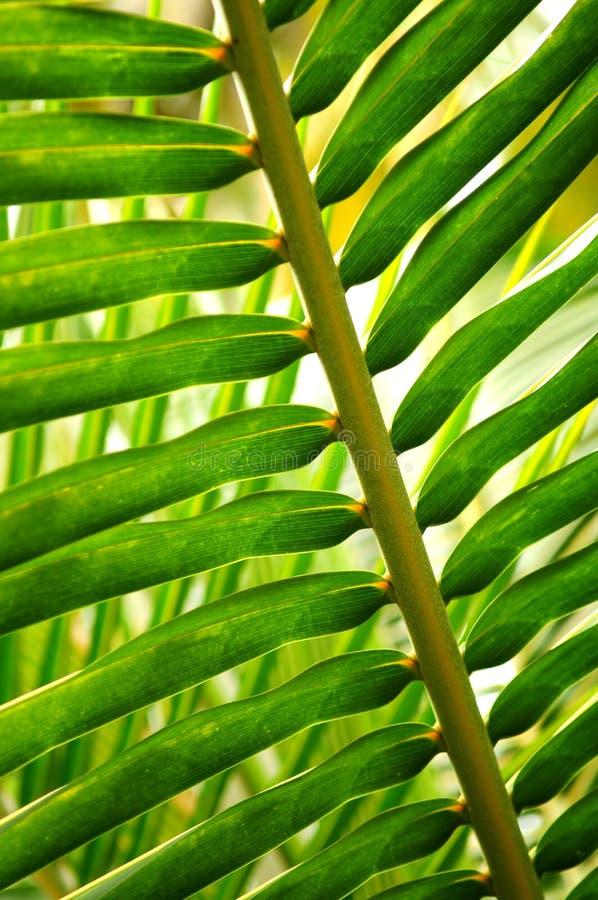 热带的叶子 图库摄影