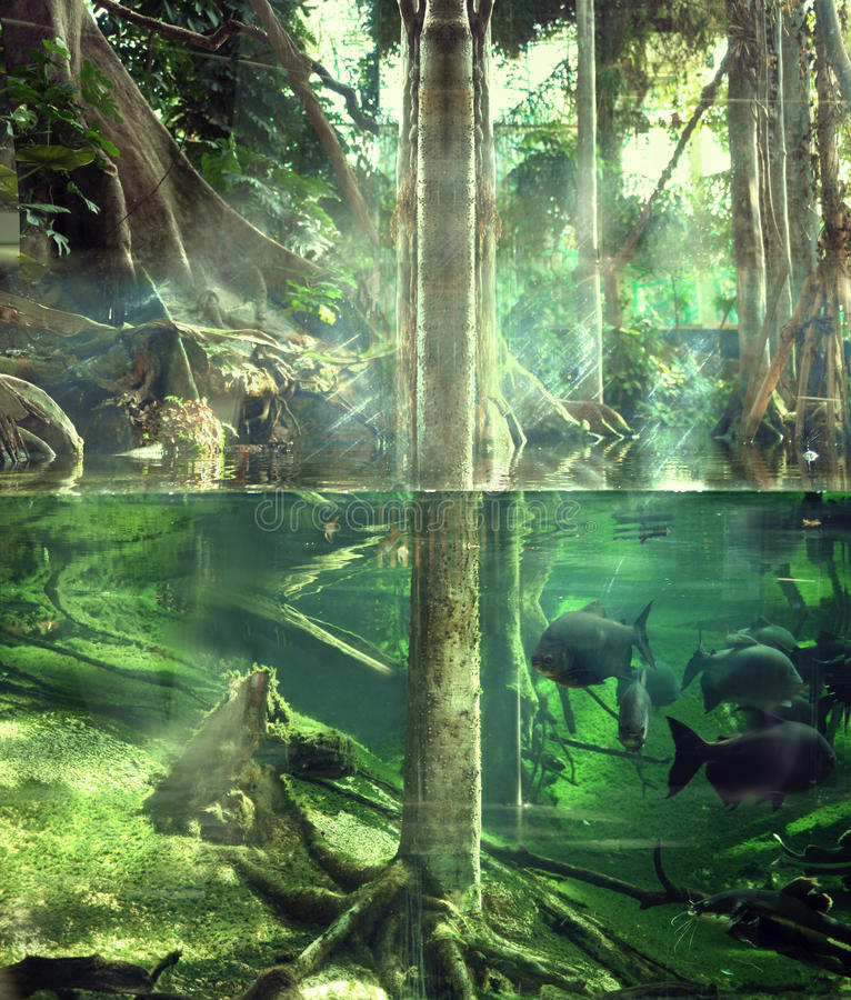 热带的密林 库存照片