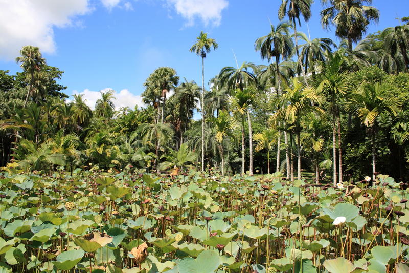 热带的庭院 免版税库存照片