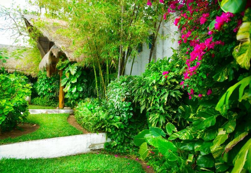 热带的庭院