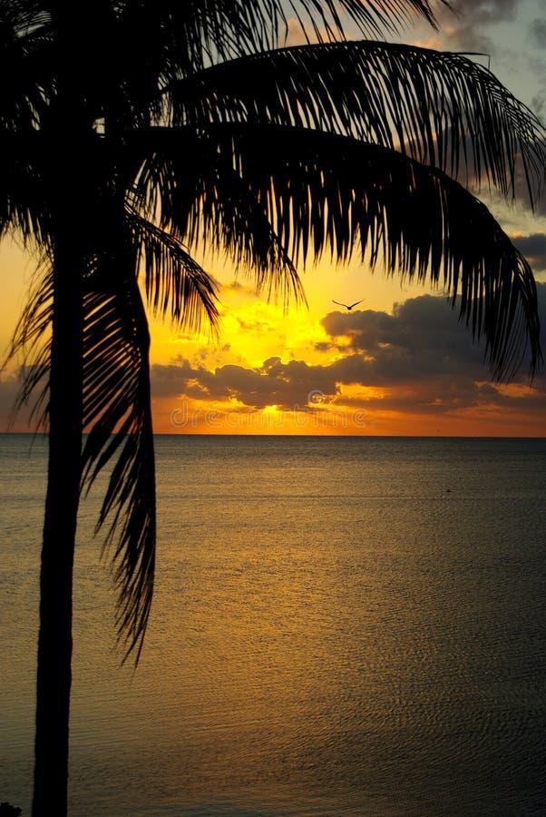 热带的日出 免版税库存图片