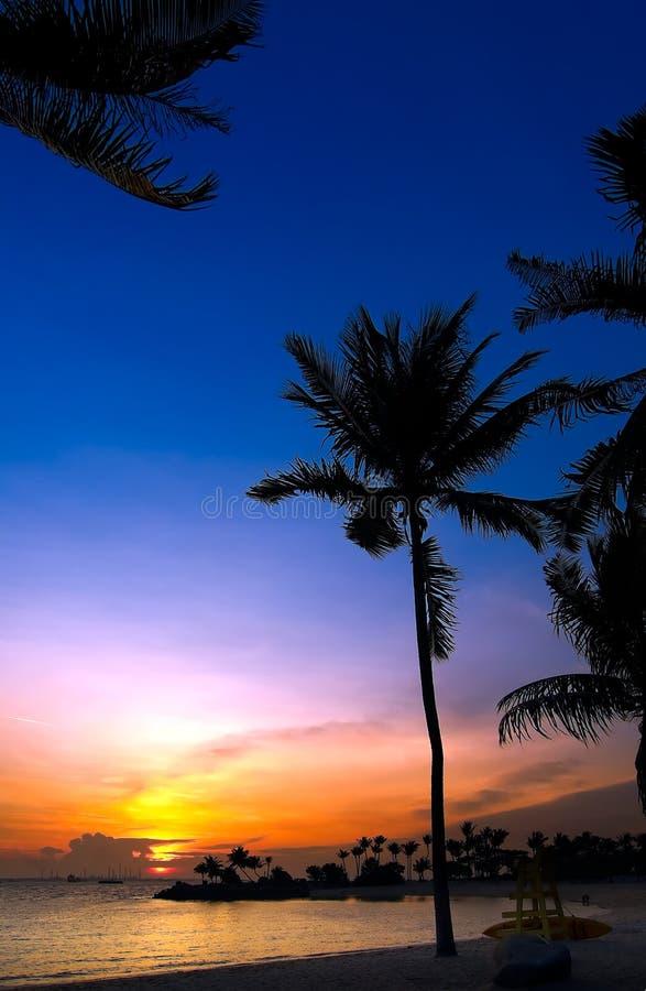 热带的日落 免版税库存照片