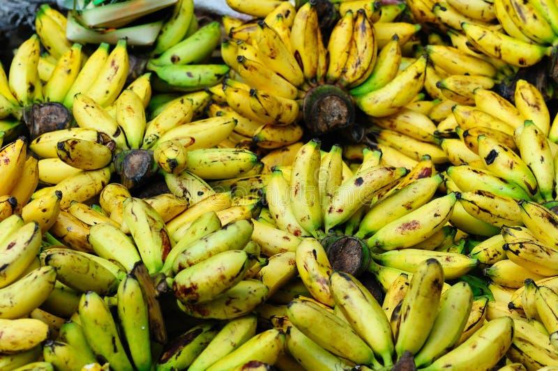 热带的果子 库存图片