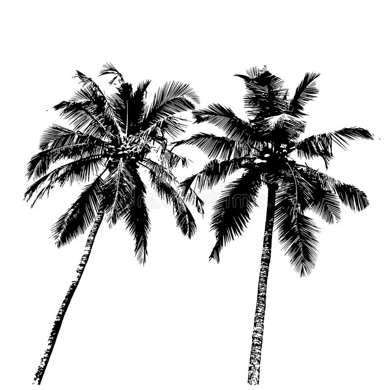 热带的棕榈树 库存例证