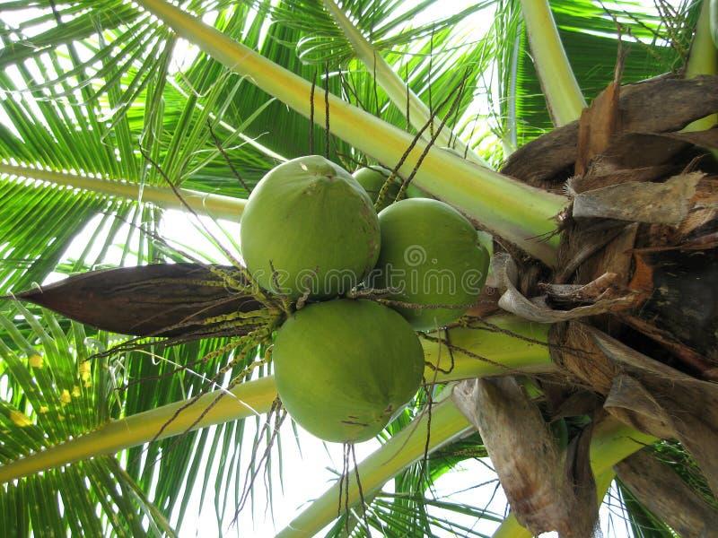 热带的棕榈树 库存图片