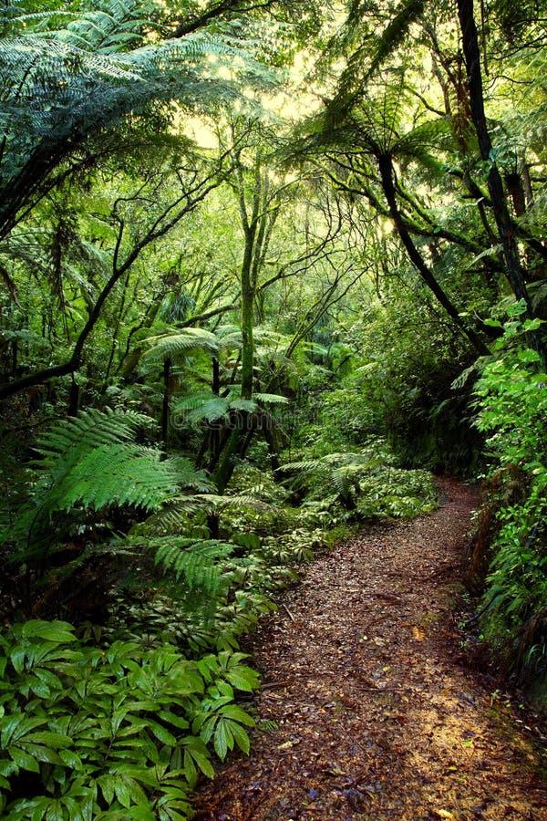 热带的森林 免版税图库摄影