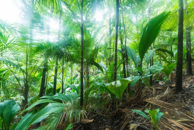 热带的森林 图库摄影