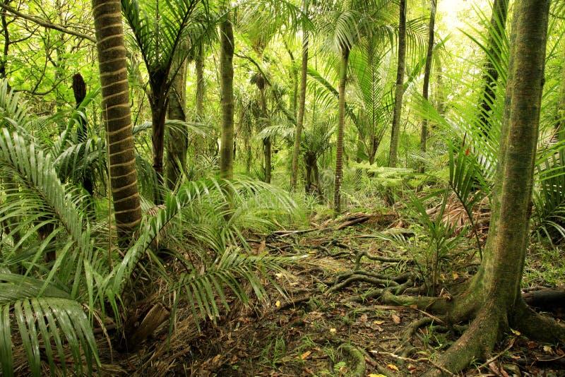 热带的森林 免版税库存照片