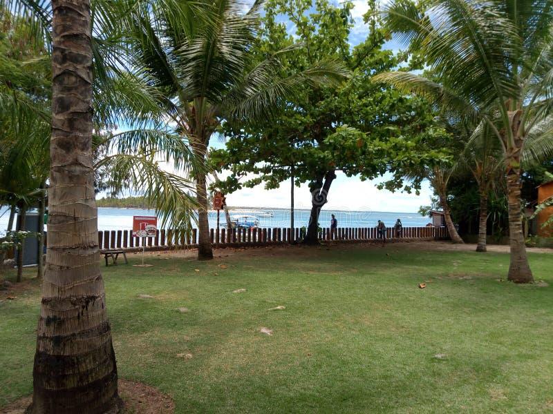 热带的横向 库存照片