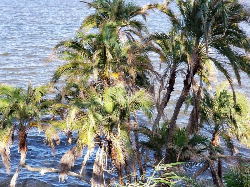 热带的横向 免版税库存照片