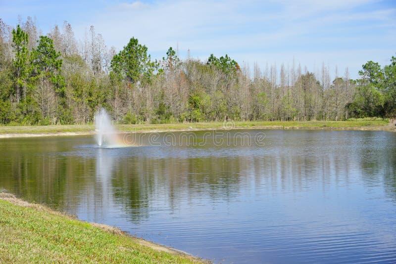 热带的池塘 图库摄影