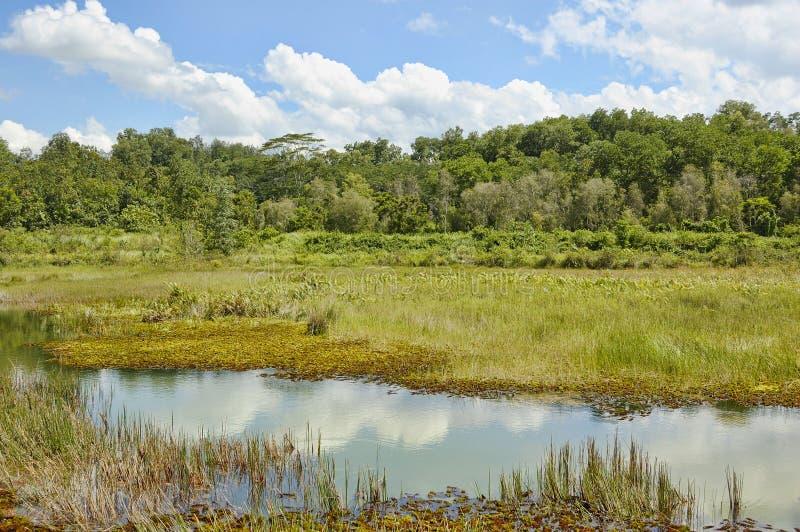 热带的沼泽 图库摄影