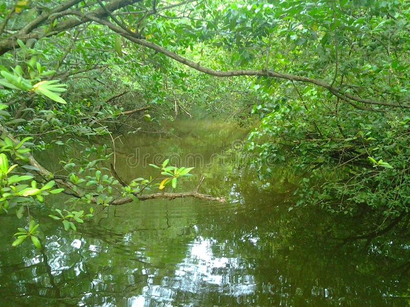 热带的沼泽 库存图片