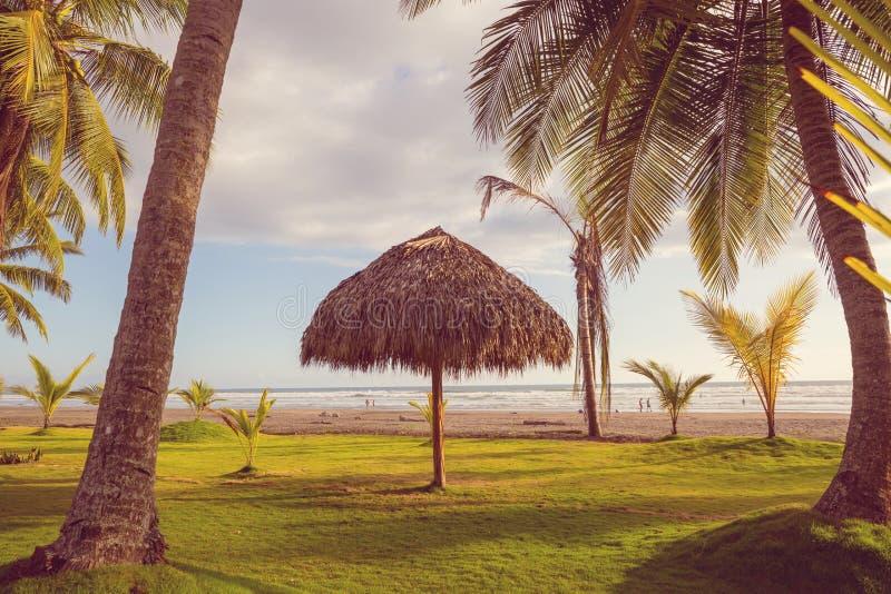 热带的海滩 库存图片