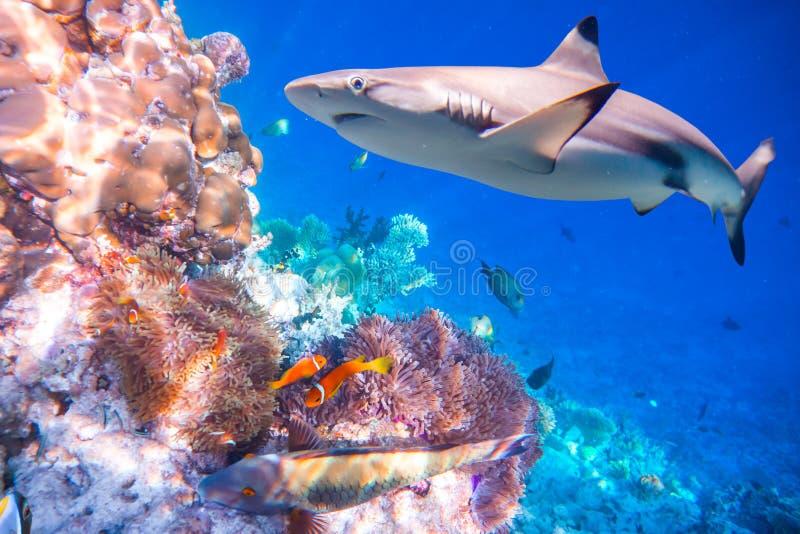 热带的珊瑚礁 免版税图库摄影