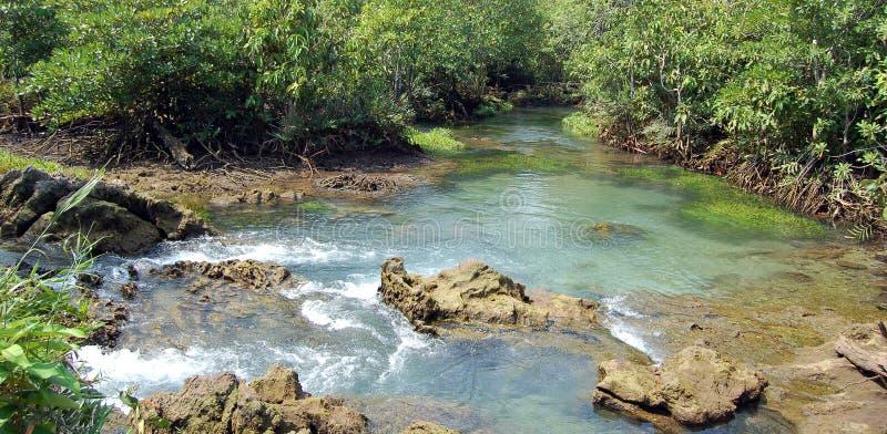 热带的盐水湖 免版税图库摄影